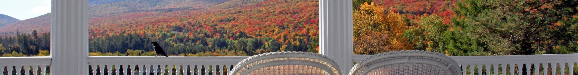 Fall Foliage In and Out of the City